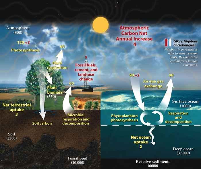 ciclo global del carbono