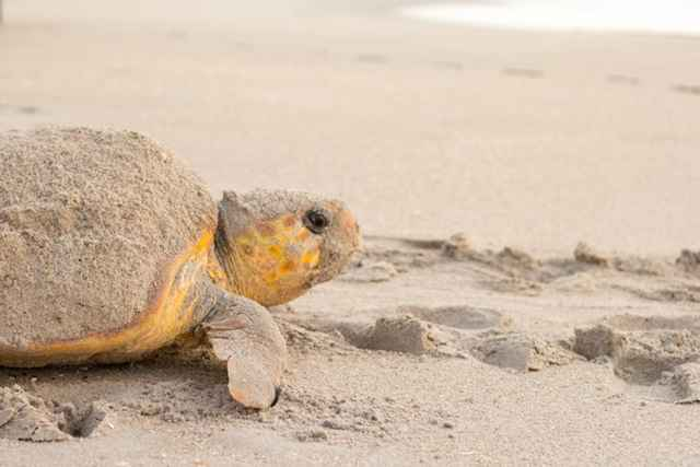tortuga marina en una playa