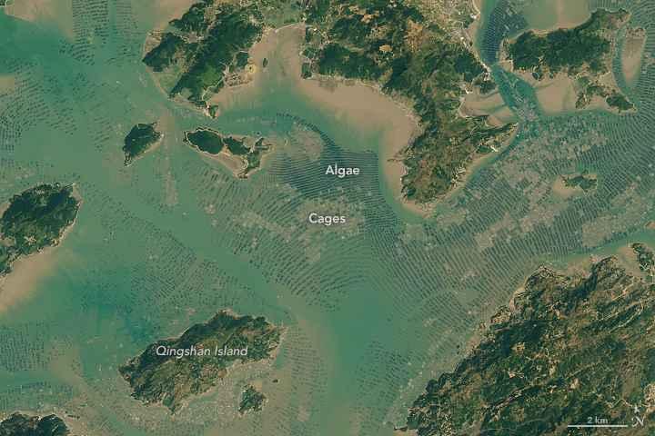 acuicultura en Sansha Bay, detalle