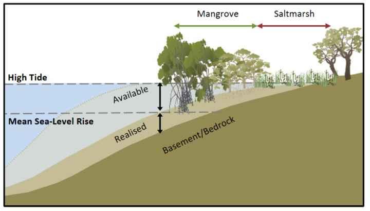 almacenamiento de carbono con la subida del nivel del mar