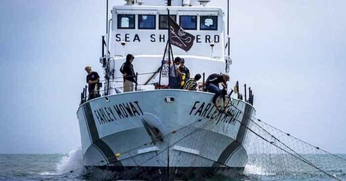 barco Farley Mowat de Sea Sheferd