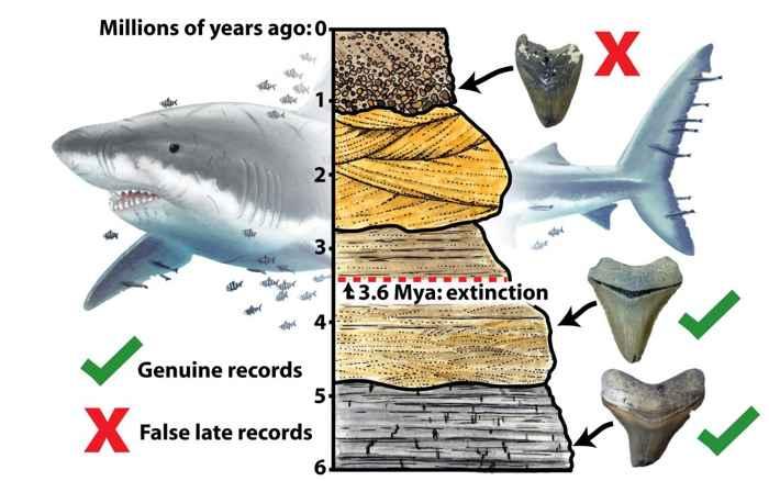 gráfico de extinción del megalodon