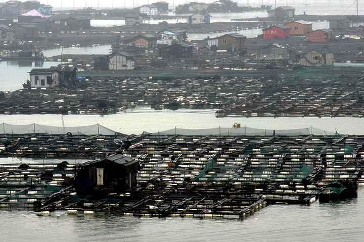 jaulas de peces para acuicultura en China