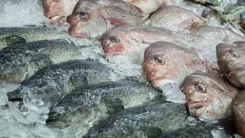 peces salvajes a la venta