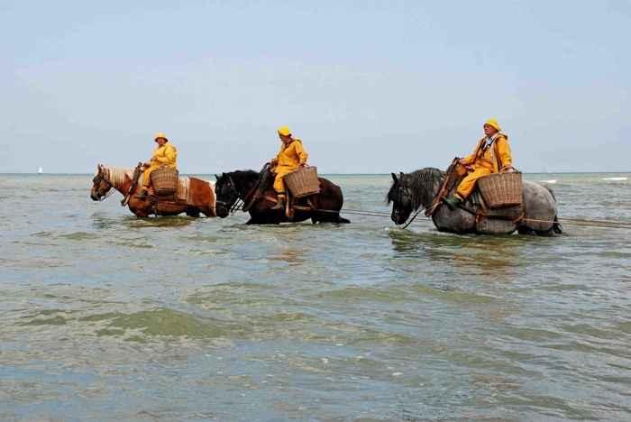 pesca a caballo en Oostduinkerke en la actualidad