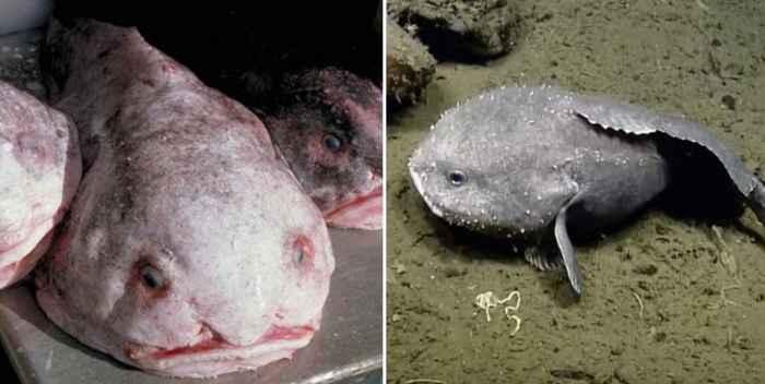 pez borrón en la superficie y en el fondo