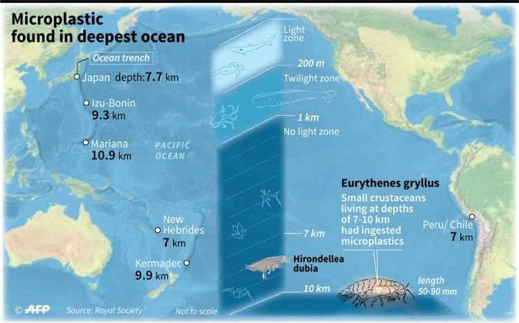plástico en las fosas oceánicas