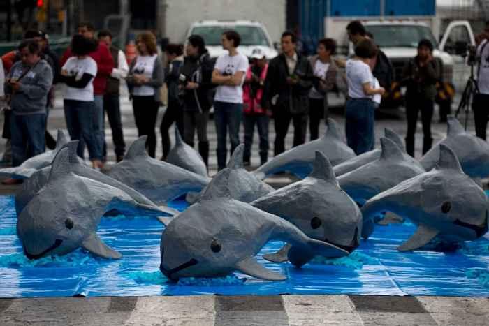 protesta contra la muerte de vaquitas marinas
