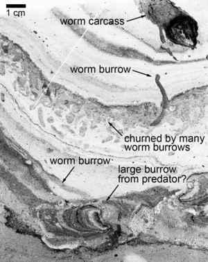 túneles de gusanos en la roca