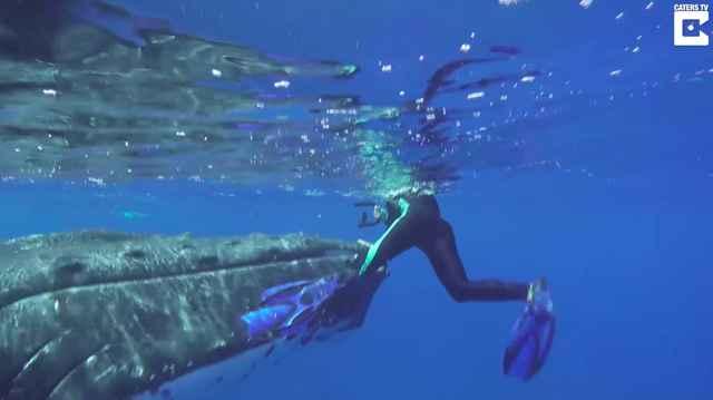 ballena empuja a una buceadora salvarla tiburón