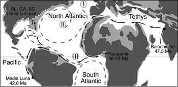 ballenas protocétidas en el Eoceno Medio