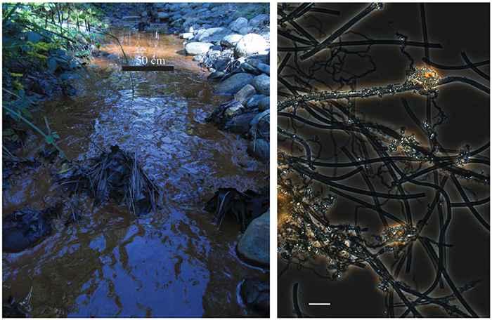 esteras de bacteria de hierro en la orilla de un río