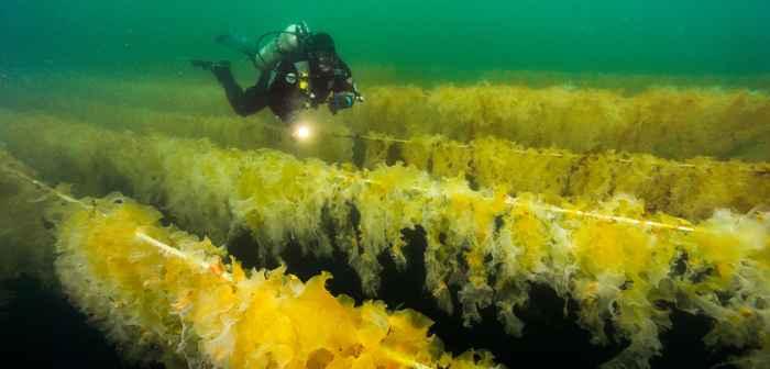 granja submarina de algas