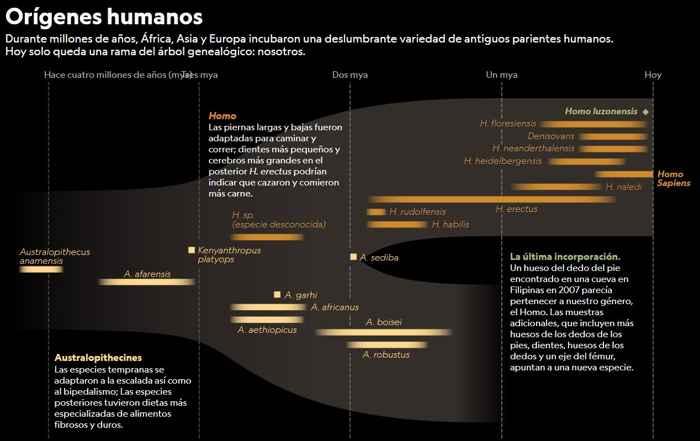 orígenes humanos
