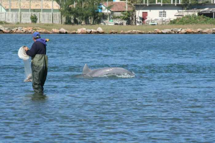 pescador y delfín en Laguna, Brasil