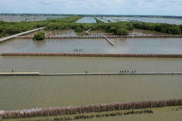 replantación de manglares en Tailandia