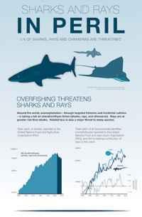 tiburones y rayas en peligro de extinción