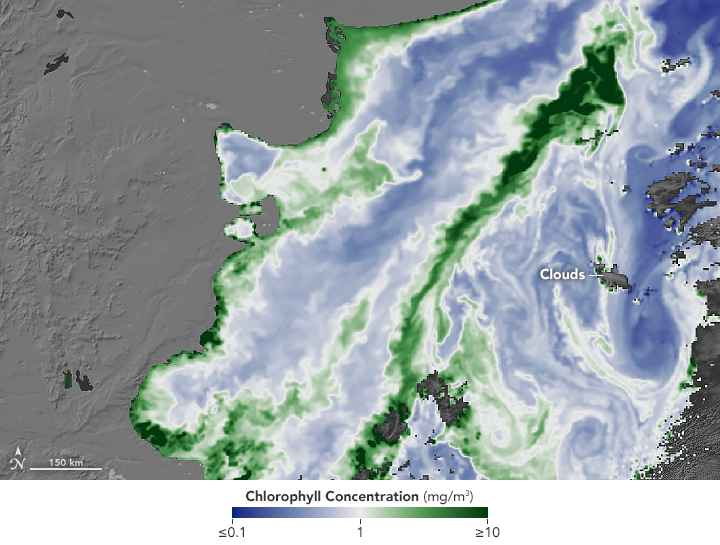 Confluencia Brasil-Malvinas de datos MODIS