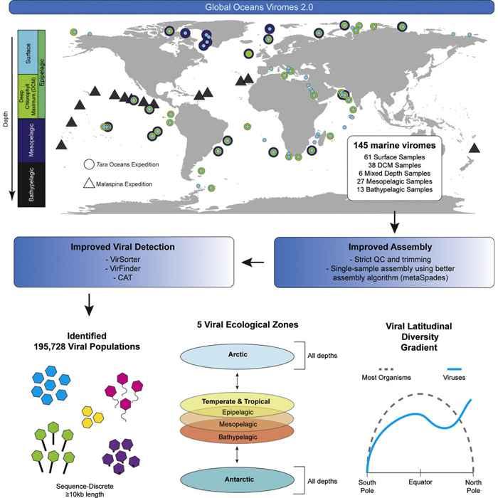 DNA viromas en el océano
