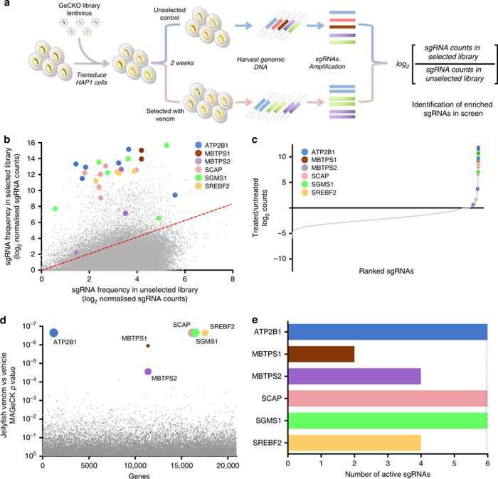análisis CRISPR de una medusa de caja