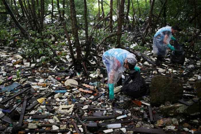 basura en un bosque de manglares