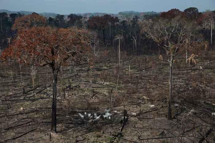 bosque talado ilegalmente