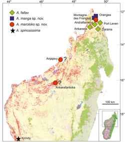distribución de insectos palo en Madagascar