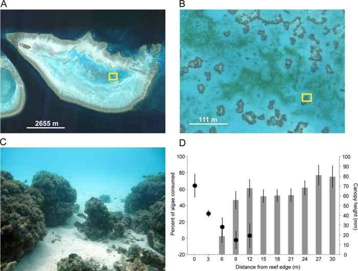halos de arena en arrecifes de coral desde el espacio