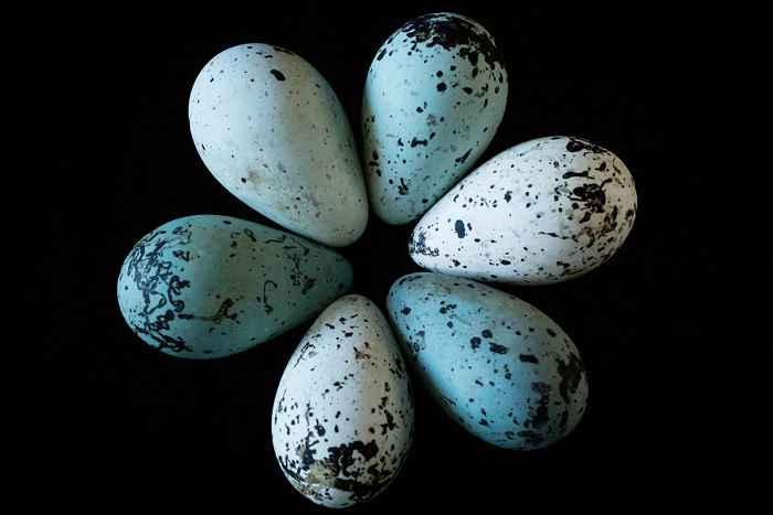 huevos de arao