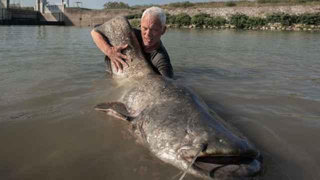 Jeremy Wade con un pez gato gigante