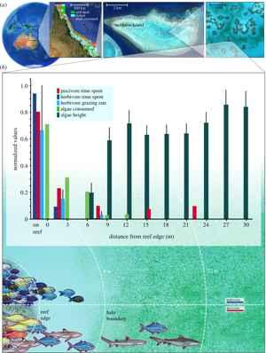 localización del estudio sobre halos de arrecife