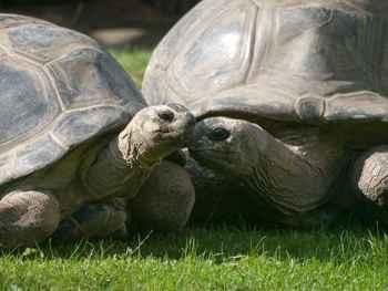 Tortugas Bibi y Poldi divorciadas