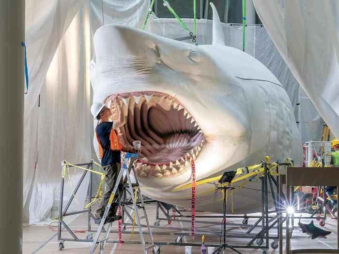 escultura del megalodon de Gary Staab