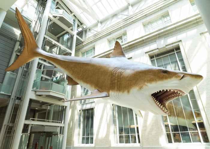 réplica del megalodon en el Smithsonian