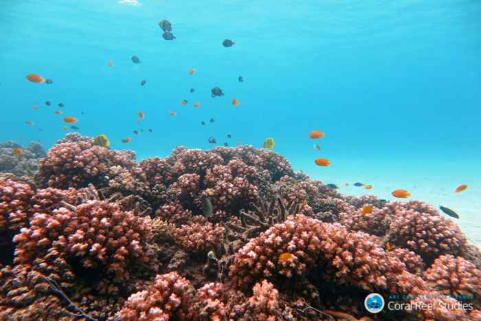 peces de arrecife