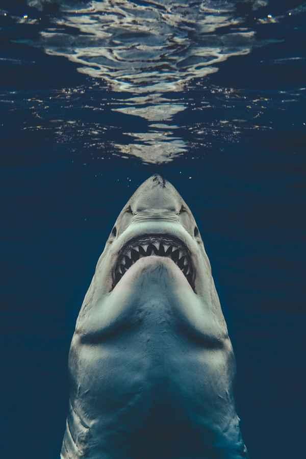 foto de un tiburón por Euan Rannachan