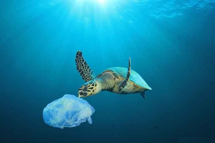 tortuga ingiriendo plástico