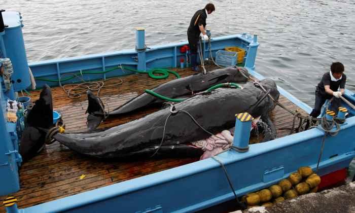 caza comercial de ballenas en Japón