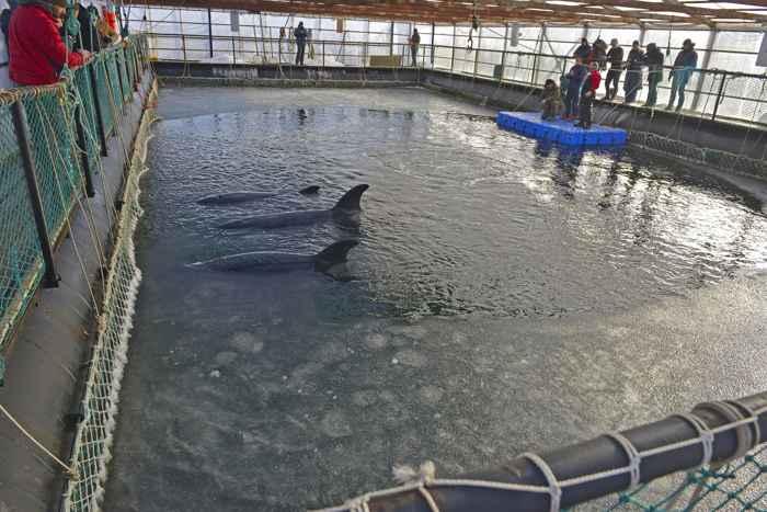 corral de ballenas en Rusia