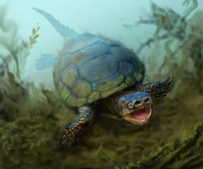 tortuga con nariz de cerdo Arvinachelys goldeni