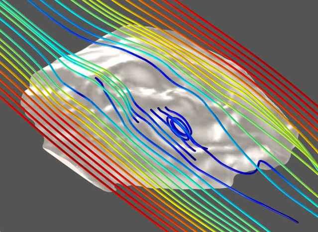 Tribrachidium, modelo 3D de dinámica de fluidos