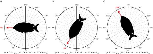 ángulos de vigilancia de peces conejo