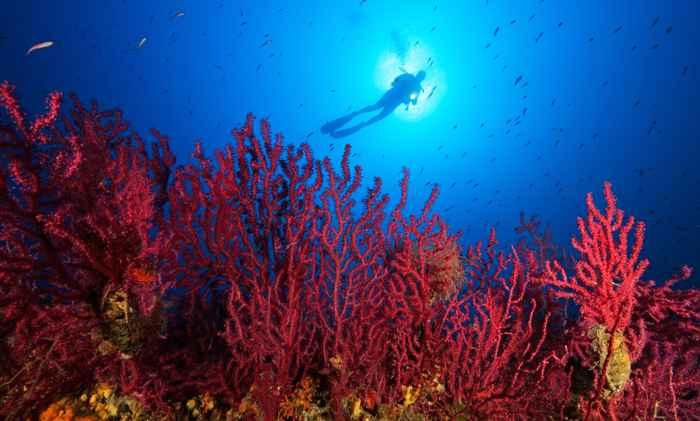 arrecifes de coral en peligro por el blanqueamiento