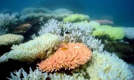 arrrecifes de coral en Australia