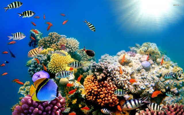 cambios en la biodiversidad marina por el calentamiento