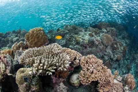 biodiversidad marina en Filipinas