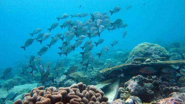 biodiversidad marina y alimentos