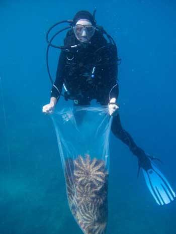 buzo retira estrellas de mar muertas