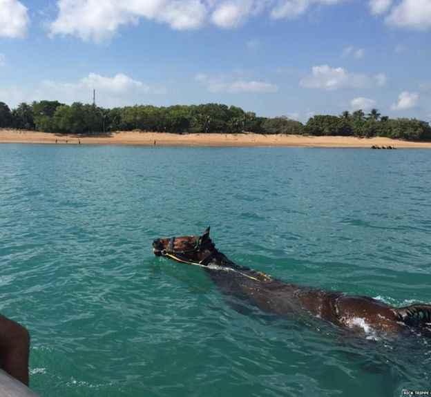caballo varado en el puerto de Darwin, Australia