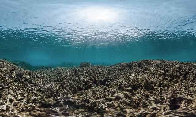 cadena alimentaria marina rota